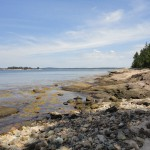 DSC00936 150x150 Jonesport / Great Wass Island Preserve