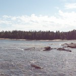 DSC00964 150x150 Jonesport / Great Wass Island Preserve
