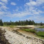 DSC01044 150x150 Jonesport / Great Wass Island Preserve